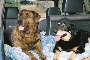 Professional Care for Pet, Home and Farm