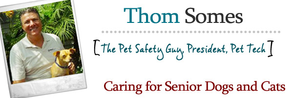Caring for Senior Dogs and Cats